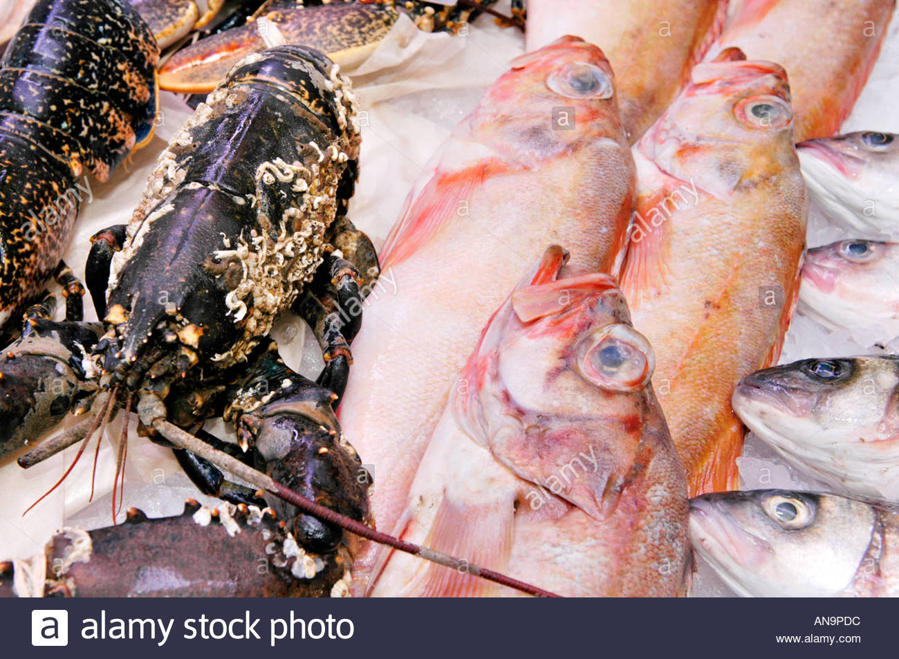 Swansea Market South Wales, Red Gurnard, live lobster and sea bass for sale on fishmongers ...