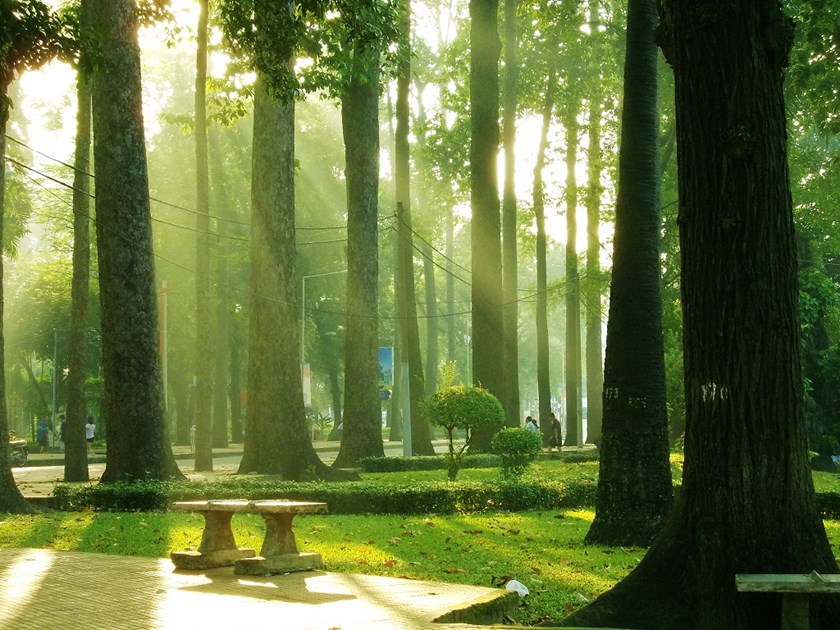 Tao Dan Park Ho Chi Minh City, HCMC may have to cut down 150-year-old trees in central park for ...