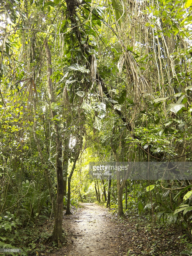 Tapir Mountain Nature Reserve Cayo District, The Trail Leading To Actun Tunichil Muknal Stock Photo | Getty Images