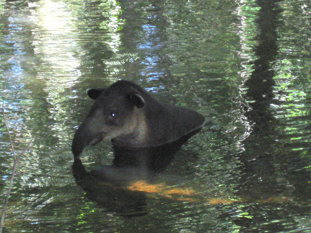 Tapir Mountain Nature Reserve Cayo District, Lower Dover Jungle Lodge | Lower Dover Field Journal | Page 18