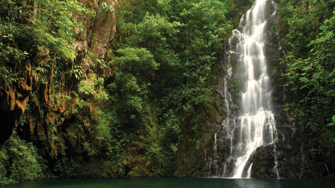 Tapir Mountain Nature Reserve Cayo District, Full Day Tours - S&L Travel and Tours