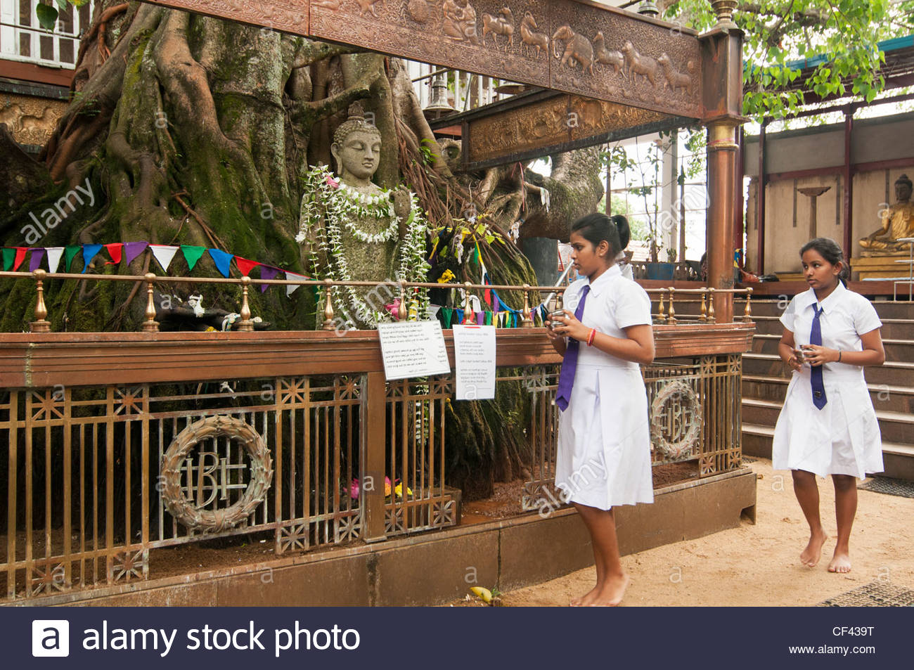 Temple Trees Colombo, girls making merit at a sacred tree at the Gangaramaya temple in ...