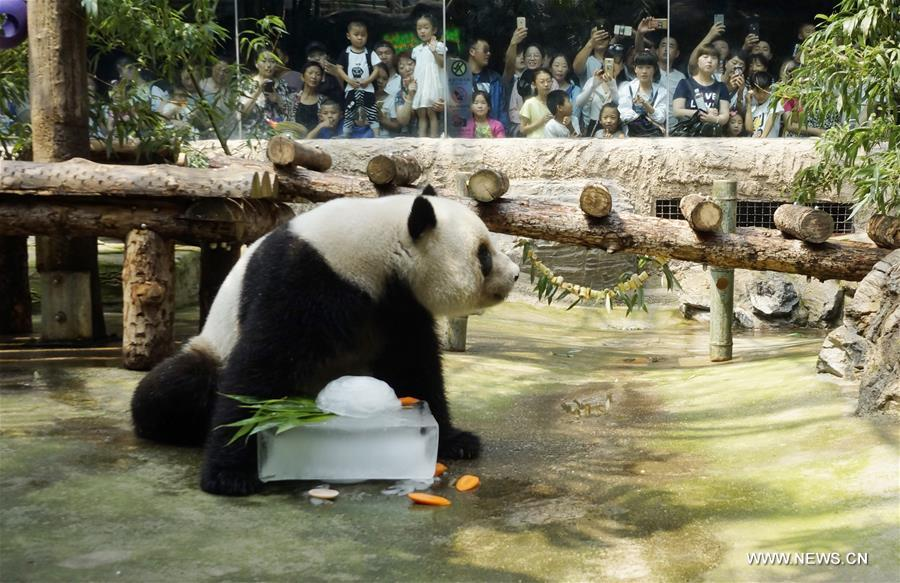 Theatre Stage Běijīng, Special treat to cool off animals at Beijing Zoo - Xinhua ...