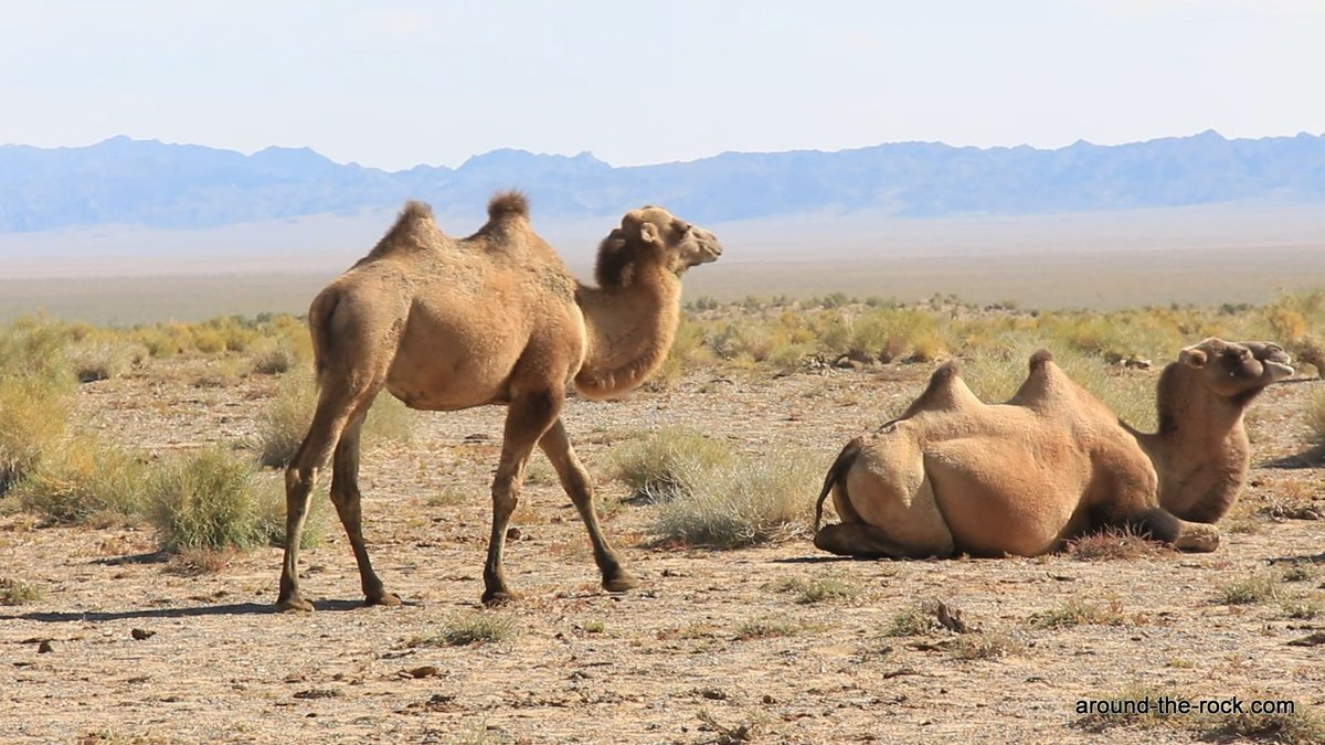 Tost Tosonbumba Nature Reserve Gurvantes, Wild Camel Protection Foundation - Around the rock reserves en