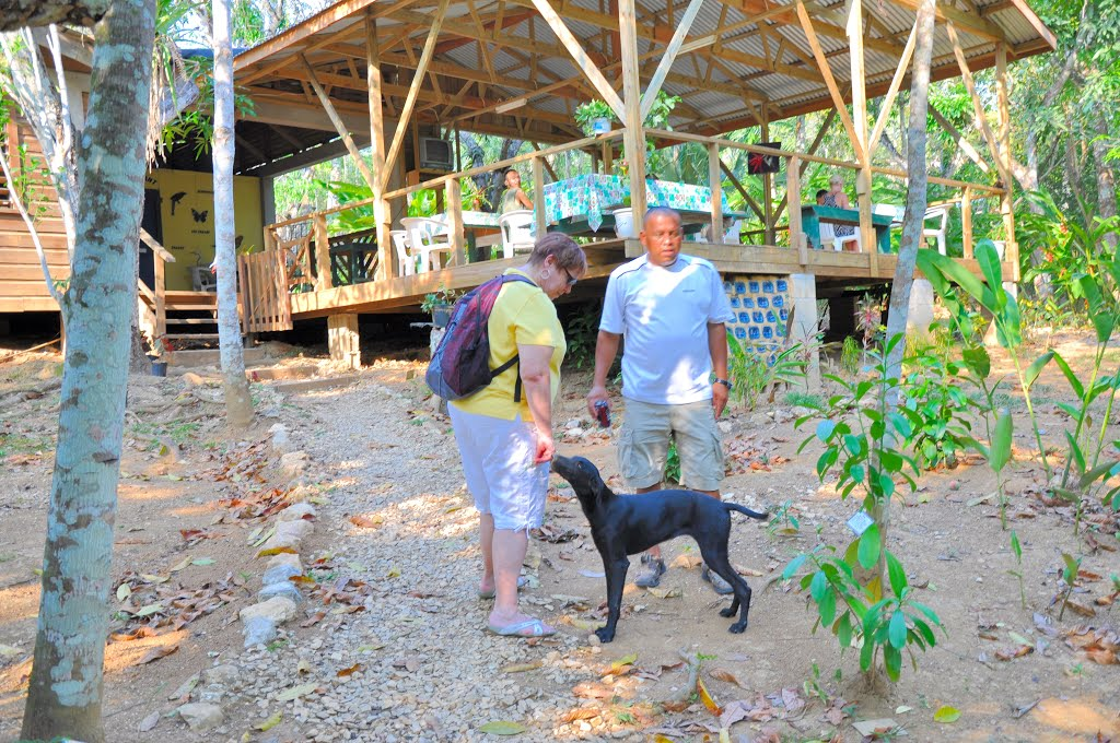 Tropical Wings Nature Center San José Succotz & Around, Panoramio - Photo of BELIZE: CAYO: SAN JOSÉ SUCCOTZ: Tropical ...