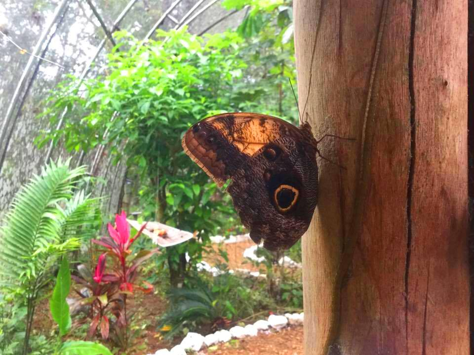 Tropical Wings The Cayo District, Motorbike Rentals & Alternate Adventures | Animals