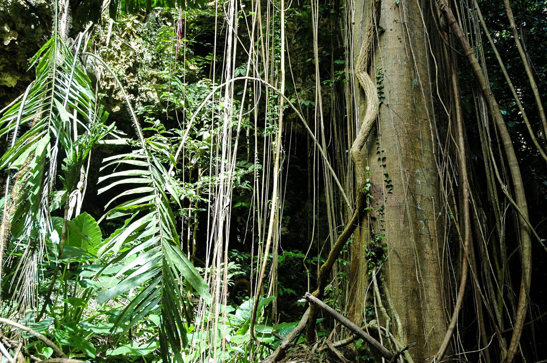 Tropical Wings The Cayo District, San Ignacio Travel Costs & Prices - Mayan Ruins, Caving, and the ...