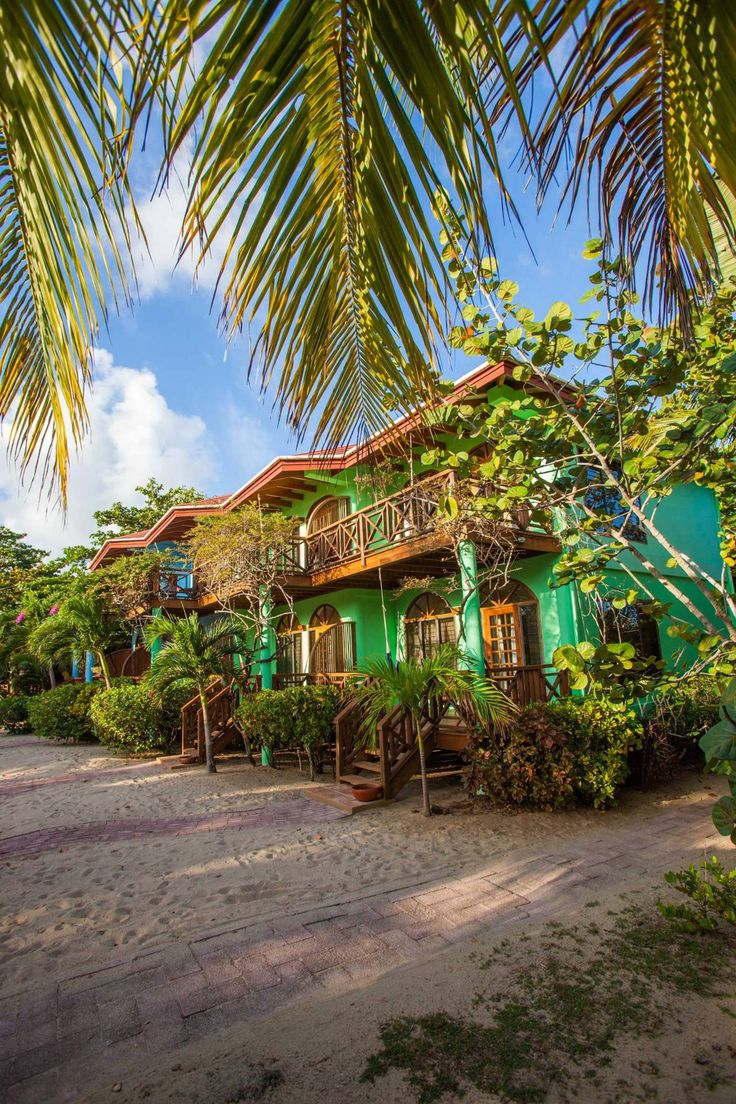 Tropical Wings The Cayo District, 17 best Flowers, Vegetables, & Fruit trees images on Pinterest ...