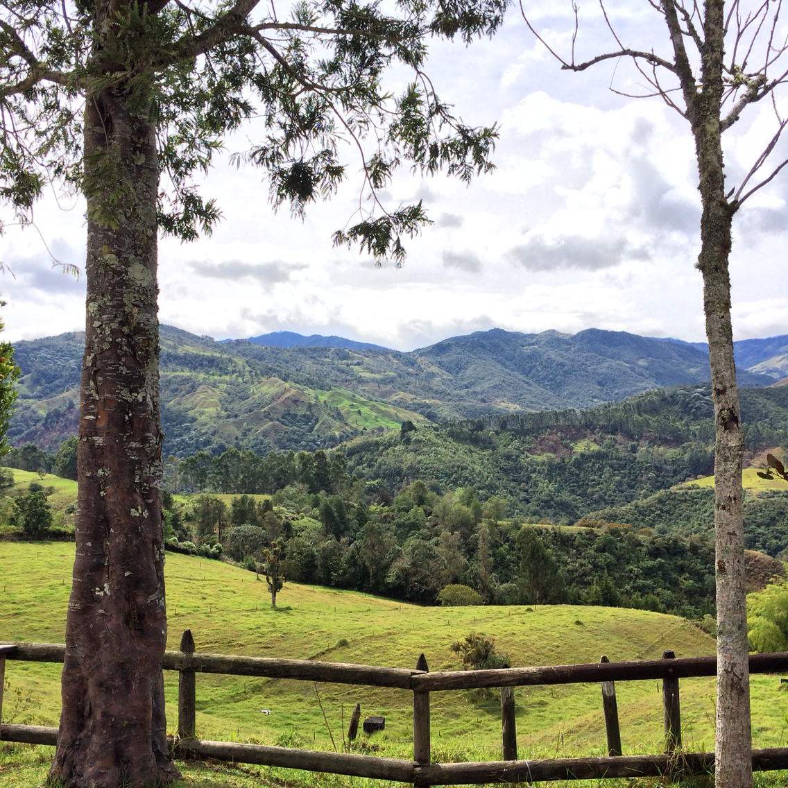 Valle de Cocora  Southwest Colombia, Valle de Cocora trek to see the wax palms near Salento in Colombia ...
