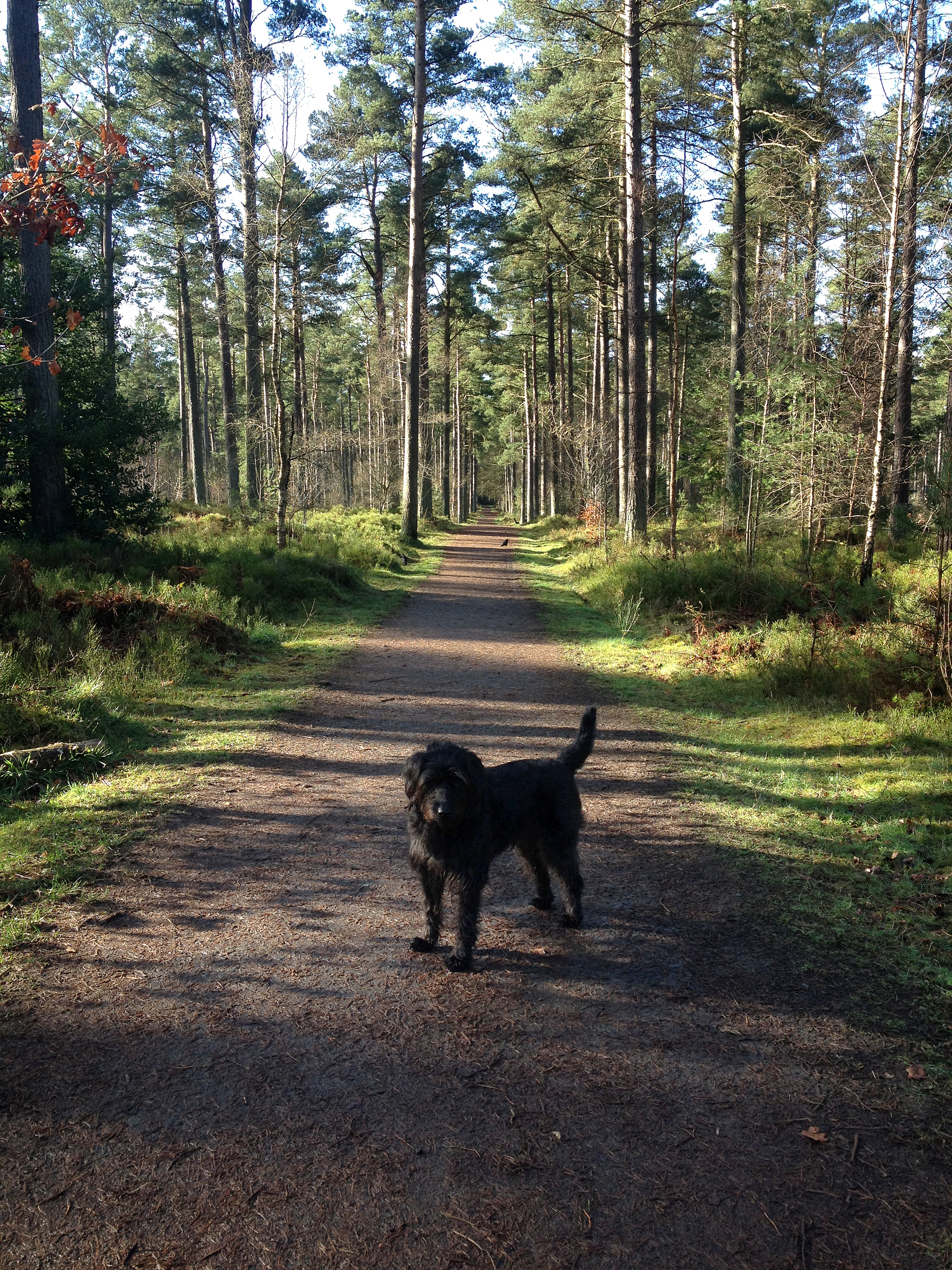 Vane Farm Nature Reserve Fife and Angus, Welcome to Fife : It's a Dog's Fife