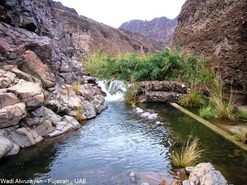 Wadi Wurayah UAE East Coast, Wadi Wurayah (Fujairah). Photo by Khameis Al Hefaity | DUBAI / UAE ...