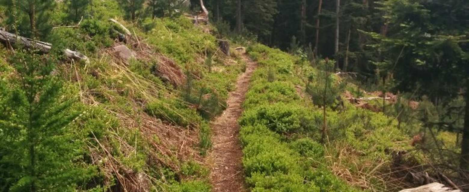 Weil der Stadt The Black Forest, Top 10 Most Beautiful MTB Trails in the Black Forest | Komoot