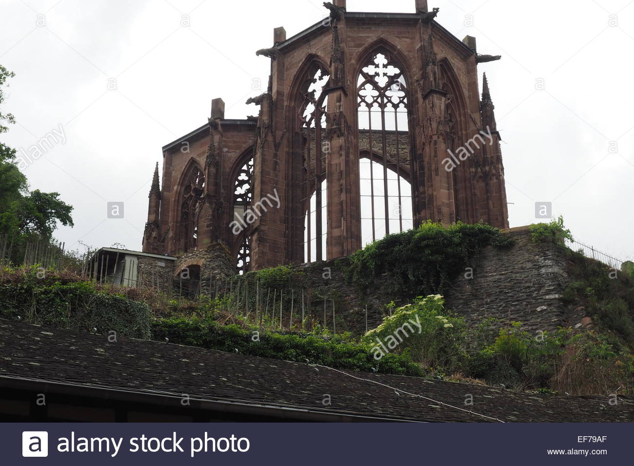 Wernerkapelle The Rhineland, Ruin of the Gothic Wernerkapelle, Bacharach Stock Photo, Royalty ...