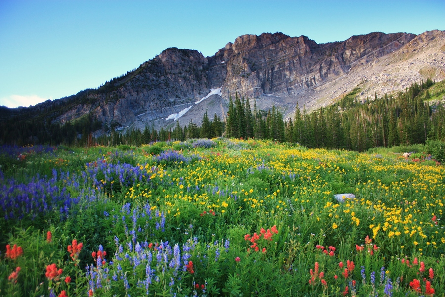 Wildcat Bluff Nature Center Amarillo, Devil's Castle, a peak in Utah's Albion Basin, viewed in early ...