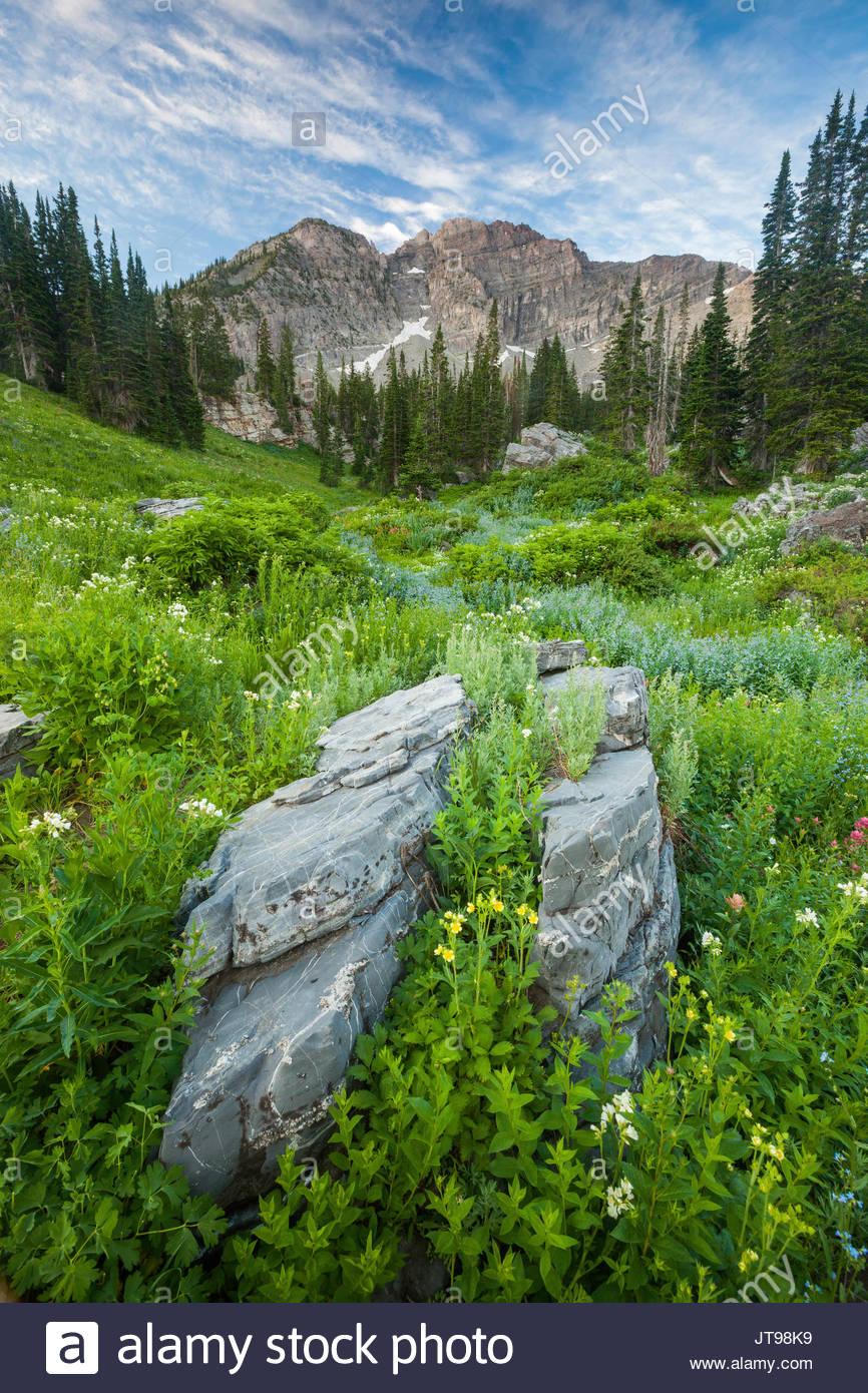 Wildcat Bluff Nature Center Amarillo, Wildflowers Of Albion Basin Stock Photos & Wildflowers Of Albion ...