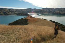 Akaroa Walks Christchurch and Canterbury | Akaroa & Banks Peninsula Coastal Walks | Christchurch & Canterbury ...