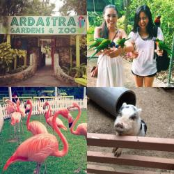 Ardastra Gardens, Zoo, and Conservation Centre New Providence and Paradise Islands | 8 best Ardastra Gardens, Zoo and Conservation Centre images on ...