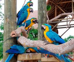 Aviario Nacional de Colombia The Caribbean Coast | Aviario National Park Cartagena - Hi Cartagena