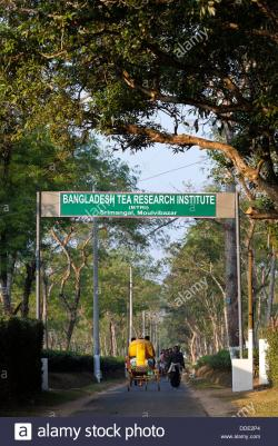 Bangladesh Tea Research Institute Srimangal & Around | A sign above the street for the Bangladesh tea research institute ...