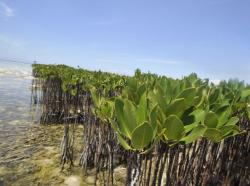 Benedictine Monastery Ambositra | events | Mangrove Action Project | Page 11