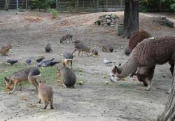 Budapest Zoo Budapest | Budapest Zoo - euro-t-guide - Hungary - What to see - 1