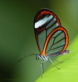 Butterfly and Insect Museum Honduras' Caribbean Coast | 24 best Pico Bonito National Park, Honduras images on Pinterest ...