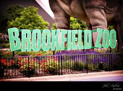 Carl Hammer Gallery Chicago | Brookfield Zoo | Chicago Wedding Ceremony Sites