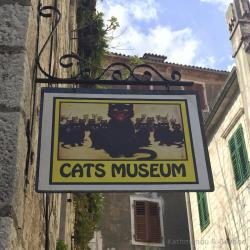 Cats Museum Kotor | Cats in Kotor Old Town, Montenegro | Europe Travel Guides