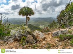 Christoffel National Park West End | Christoffel National Park Palm Tree Views To The Sea Stock Image ...