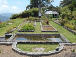 Cinchona Gardens Section & Clydesdale | What's Right With Jamaica? Cinchona Botanical Gardens | diGJamaica ...