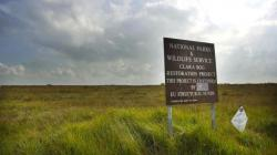 Clara Bog Nature Reserve County Offaly | Rare moss thought to be extinct in Ireland found in Offaly bog