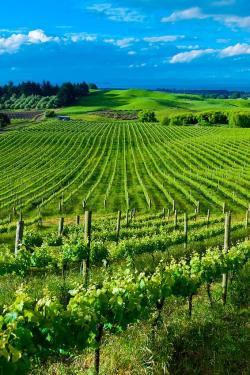 Wither Hills Winery & Restaurant Upper South Island and the West Coast | Best 25+ New zealand wine ideas on Pinterest | Nz holidays 2016 ...