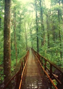Columbia Forest Reserve The Deep South | 105 best South Carolina images on Pinterest | Carolina usa ...