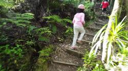 Dome Forest Warkworth | Dome Forest Walkway Lookout - YouTube