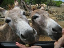 Donkey Sanctuary Bonaire South End   This Beautiful Island In The Caribbean Is Completely Filled With ...