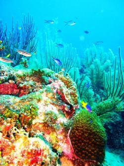 Emerald Forest Reef The Cayes and Atolls | 25+ beautiful Belize barrier reef ideas on Pinterest | Belize ...
