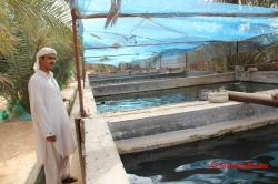 Fish Farm Liwa Oasis | fish farm liwa | The Desert Diva