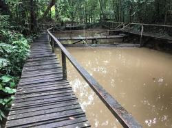 Frog Pond Kubah National Park   Field Herp Forum • View topic - Malaysia 2017, part 5: Kubah ...