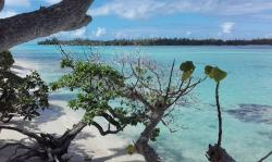 Gallery Umatatea Huahine | B&B Nature Song Island - Reviews, Photos & Rates - ebookers.com