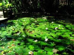 Garden of the Sleeping Giant Foothills of the Sabeto Mountains | Garden of the sleeping giant fiji - Google Search | Garden of the ...