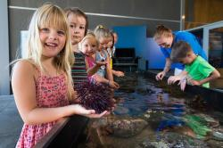 Goat Island Marine Discovery Centre Leigh | Goat Island Marine Discovery Centre | Leigh | Activities ...