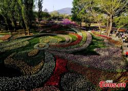 Ten Fu's Tea Culture House Běijīng | Best time to view tulips at Beijing Botanic Garden (1/5)