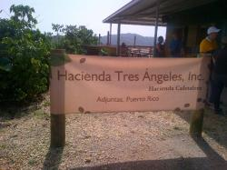 Hacienda Tres Angeles Adjuntas & Around | Hacienda Tres Angeles (Adjuntas, Puerto Rico): Top Tips & Info to ...