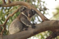 Hanson Bay Wildlife Sanctuary South Coast Road | Wildlife Tours — Hanson Bay Wildlife Sanctuary & Cabins