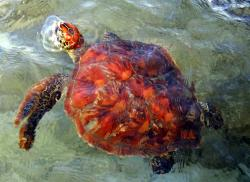 Hibiscus Foundation for Protected Turtle Species The Other Islands | French Polynesia