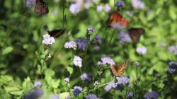 Historic Village at Allaire Asbury Park | The National Butterfly Center - YouTube