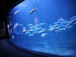 Institut du Monde Arabe Paris | The Paris Aquarium - Visit and tickets