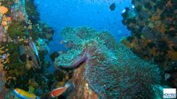 Japanese Gardens Dive Site Ko Tao   Koh Tao Dive Sites — KOH TAO : a Complete Guide