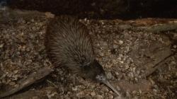 Kiwi Birdlife Park Queenstown | Kiwi Birdlife Park Video - YouTube