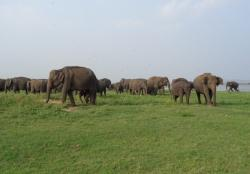 Minneriya National Park Minneriya & Kaudulla National Parks | Minneriya National Park | Minneriya Safari | Minneriya Safari ...